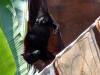 animal-kingdom-bat-01.jpg