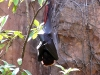 animal-kingdom-bat-02.jpg