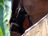animal-kingdom-bat-04.jpg