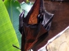 animal-kingdom-bat-05.jpg