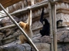 animal-kingdom-monkey-03.jpg