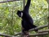 animal-kingdom-monkey-04.jpg