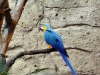 animal-kingdom-parrot-01.jpg