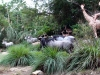 magic-kingdom-jungle-cruise-11.jpg