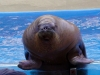 seaworld-clyde-and-seamore-31.jpg